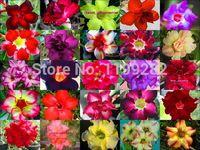 Super Affordable 100 Genuine 2014 Fresh Mix Color Adenium Obesum Seeds 100 SEEDS Bonsai Desert Rose