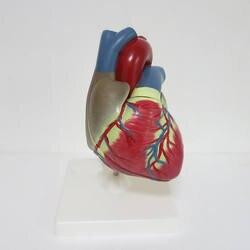 3 раза большой ПВХ сердечной анатомии модель Спецодежда медицинская учебного пособия учебных инструмент Clinic фигурки