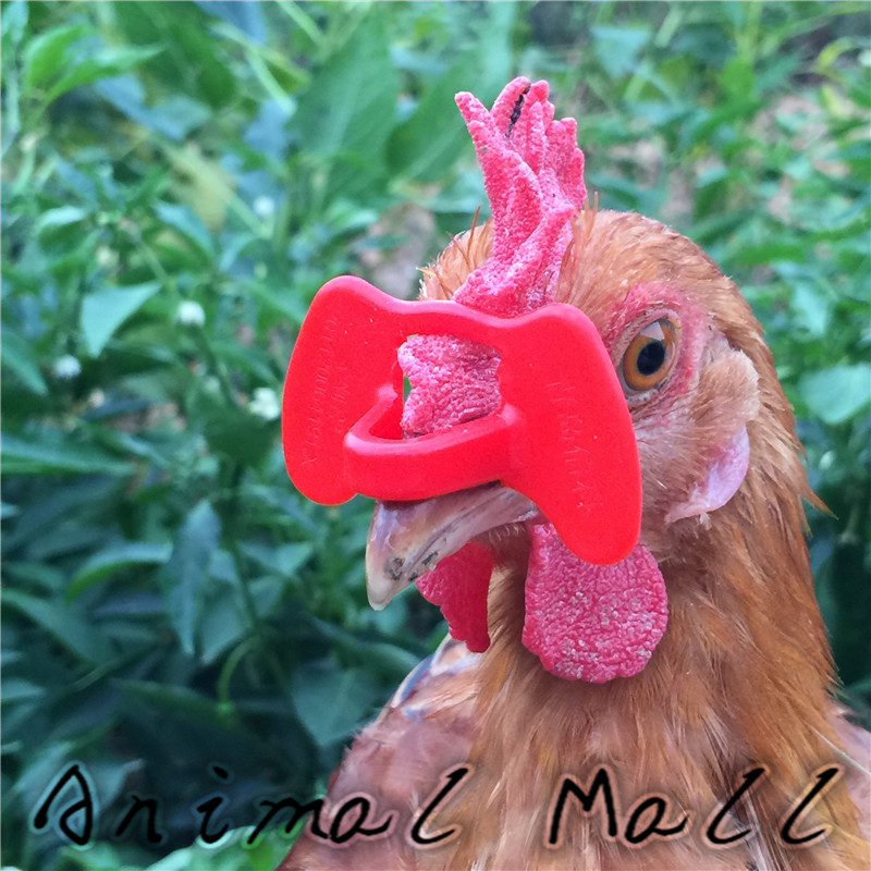 20 Pcs Chicken Glasses Visor Anti-pecking Tools Great Pheasant Broiler Caged Hens Cockerel Hen Peacock Cockfighting 4.5 X 2.7 Cm