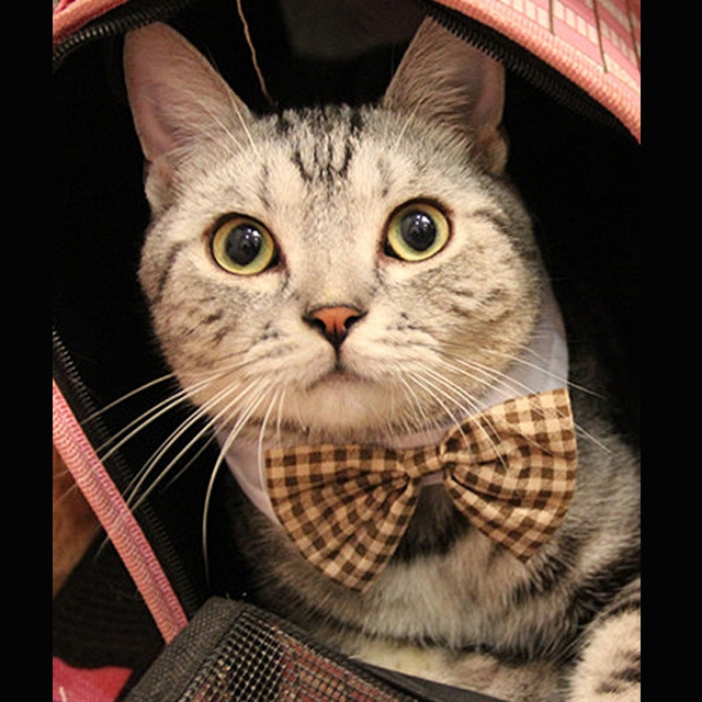 Beautiful Dog Collar Bow Adorable Dog - Fashion-Cute-Small-Dog-Collars-Bow-Tie-Cats-Tie-Pet-Accessories-Pet-Cat-Dog-Bowtie-Collar  Gallery_100128  .jpg