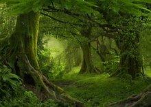 Selva Safari Árvore Floresta foto cenário Vinil Computer impresso partido foto fundo do estúdio de pano de Alta qualidade