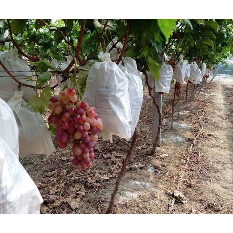 50Pcs/Lot Garden Vegetable Grapes Apples Fruit Protection Bag Pouch Agricultural Pest Control Anti-Bird Mesh Bags