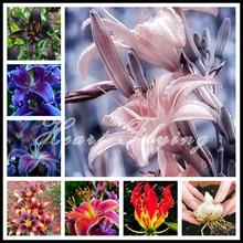 Lily bulbs true bulbs plant lily flower seeds home garden plant bonsai original professional 2 Trees