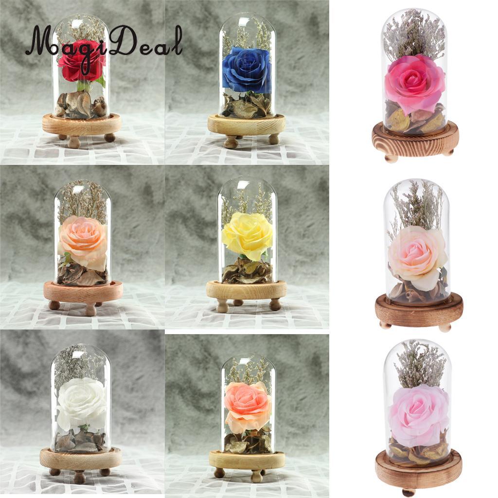 Decorative Clear Glass Display Cloche Bell Jars Plants