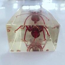 Настоящий кнут Скорпион внешний вид встроенные образцы прозрачная смола сороконожка Скорпион модель биология членистоногие учебные средства