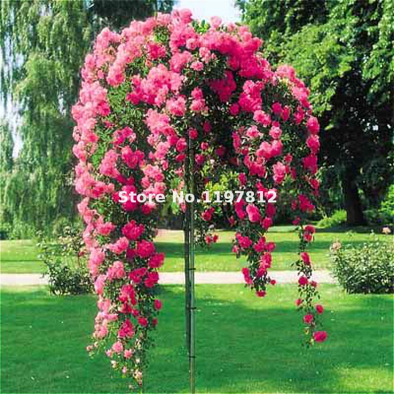 Coupon code high mowing seeds