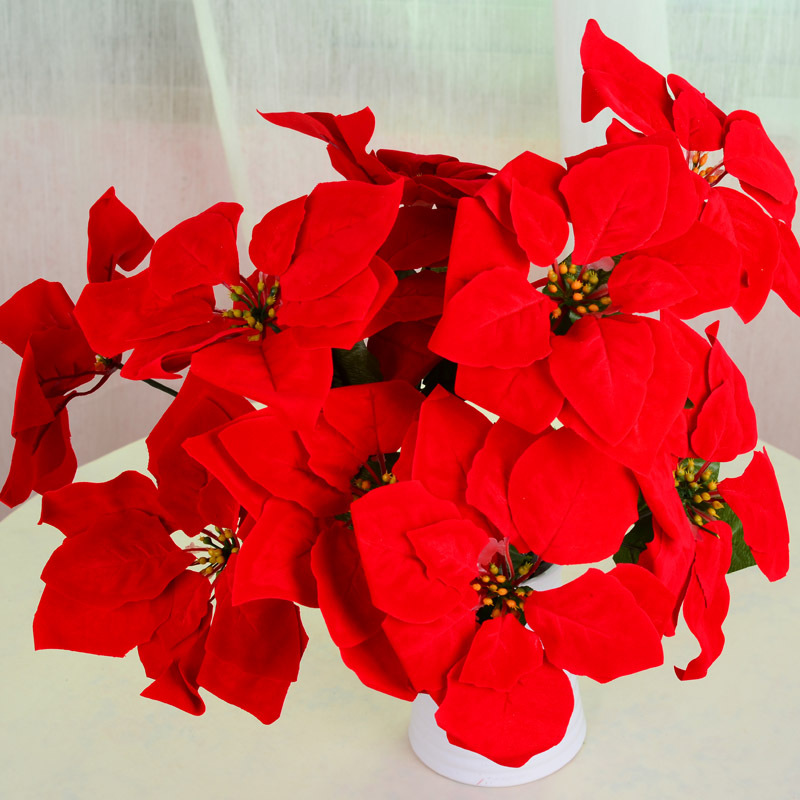 poinsettia christmas flower - Christmas Poinsettia