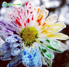 100pcs/bag Rainbow Daisy Seeds, Rainbow Chrysanthemum, Bonsai Flower seeds, Natural Beautiful Potted Plants for Home Garden