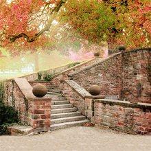 Laeacco – arrière-plan de photographie pour Studio Photo, mur de brique, ancien escalier, mur d'entrée, arbre, érable, scène