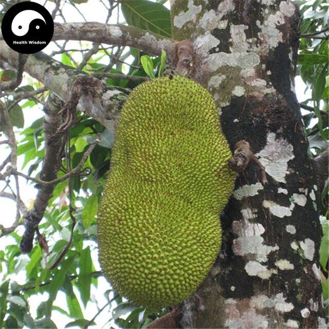 Acquistare jackfruit semi di albero 6 pz pianta di ananas for Albero di ananas