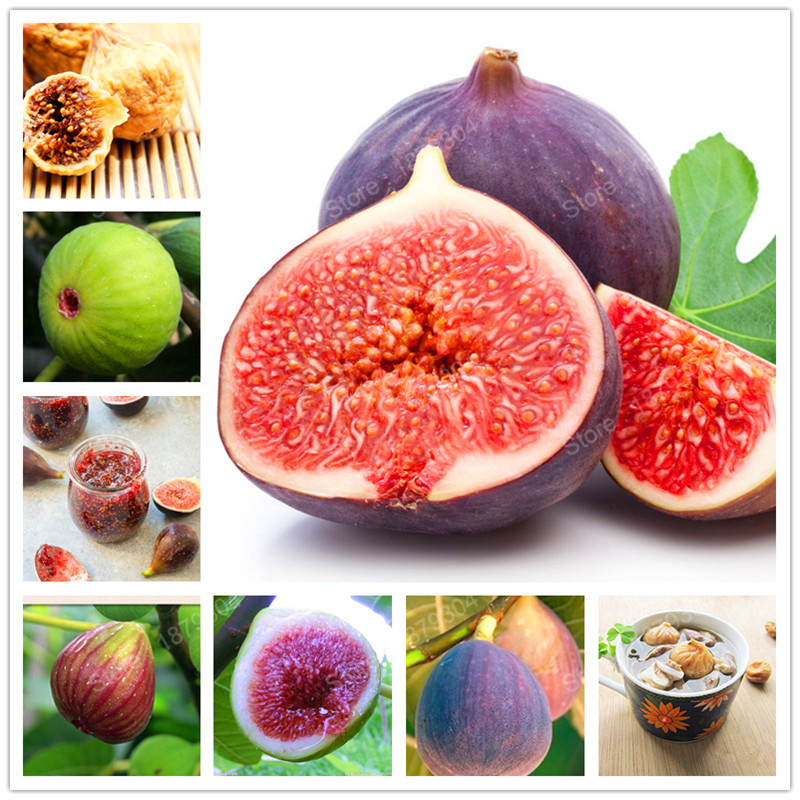 50pcs Figs Seeds Sweet Honey Fruit Seeds Fig Tree Bonsai
