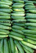 Бесплатная доставка Голландия огурец, семена огурца, фрукты и овощи семена 50 Шт./пакет