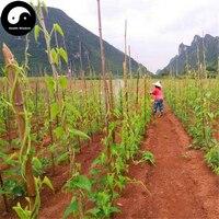 Buy Chinese Common Yam Rhizome Seeds 30g Plant Yam Dioscoreae Rhizoma