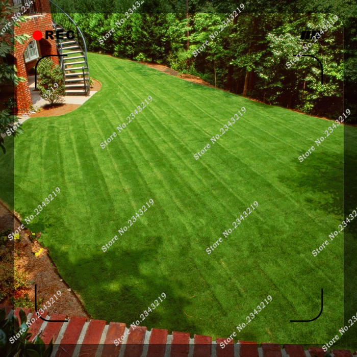 200pcs/bag Green Source Turfgrass grass Seeds Evergre P