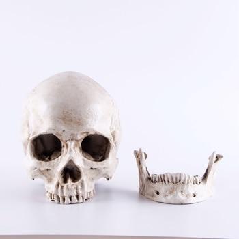 Resin Skull Mold Lifesize 1:1 Medical People Skull Model Halloween Home Skull Statues Decoration Decorative Sculptures Crafts фото
