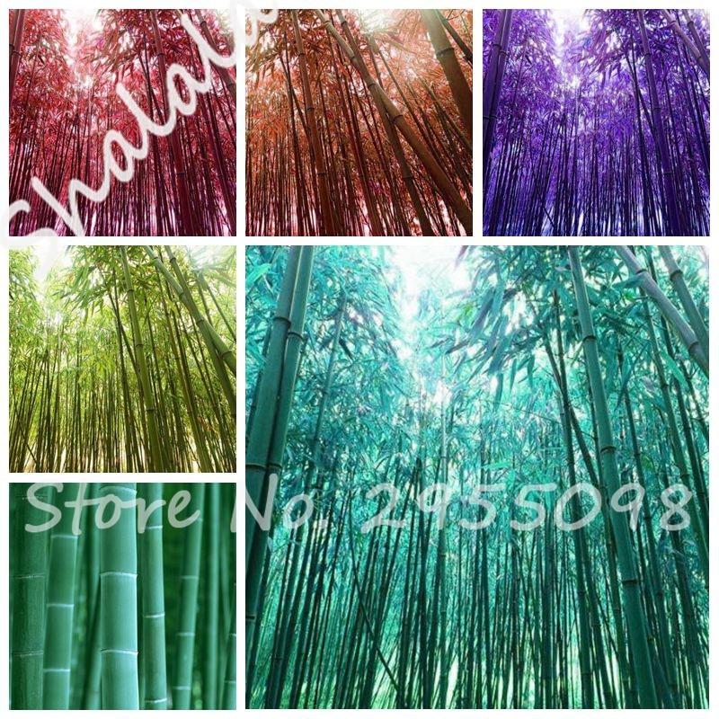 Garden Pots For Sale Part - 34: Big Sale! 10 Pcs Garden Pots Planters Perennial Plant Bamboo Tree Seeds  Bonsai Bambu Seeds