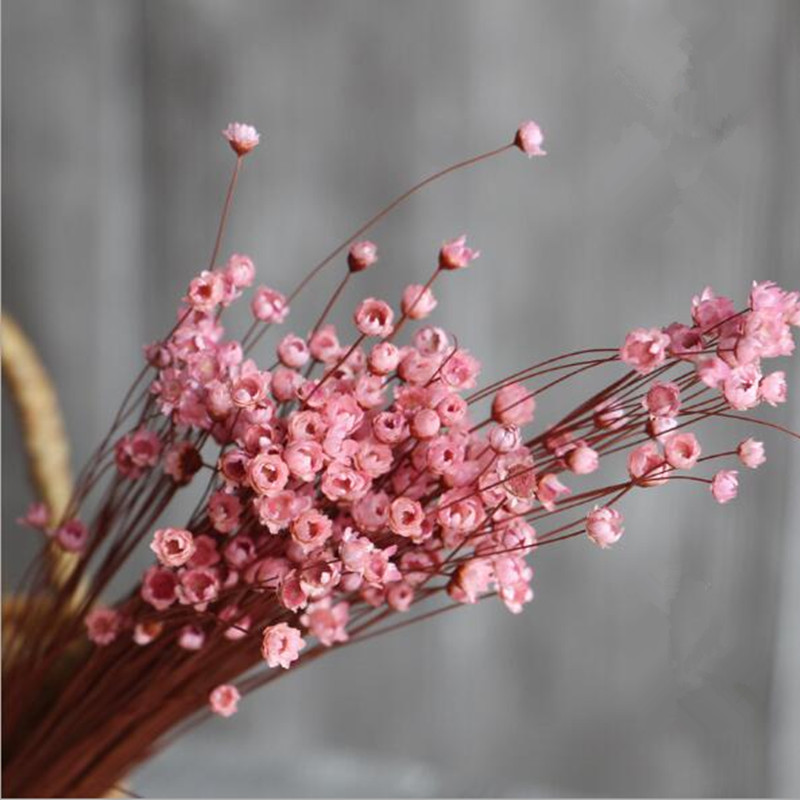 Natural small daisy dried flowers wholesale art art fresh home decoration  furnishings bouquet shooting props