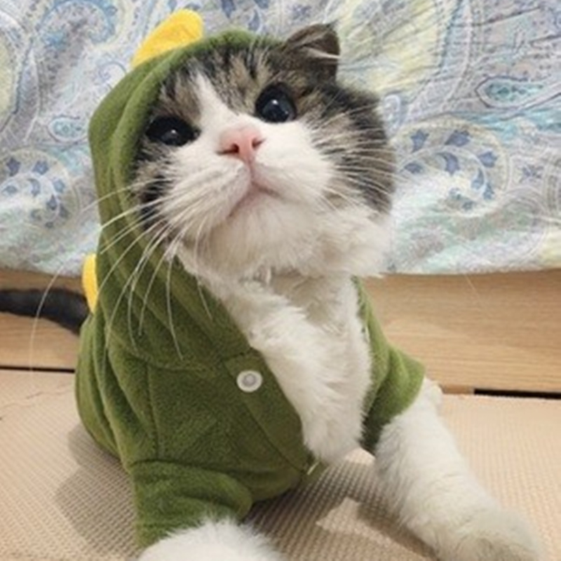 Cat Clothing Imported From Abroad Warm Cat Clothes Soft Pet Clothes For Cats Funny Pet Costumes Cat Supplies Red Green Xs To Xl 10d20q Cat Supplies