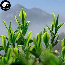 Buy Black Tea Tree Seeds 30pcs Plant Chinese Keemun Tea For Qi Men Hong Cha(China)