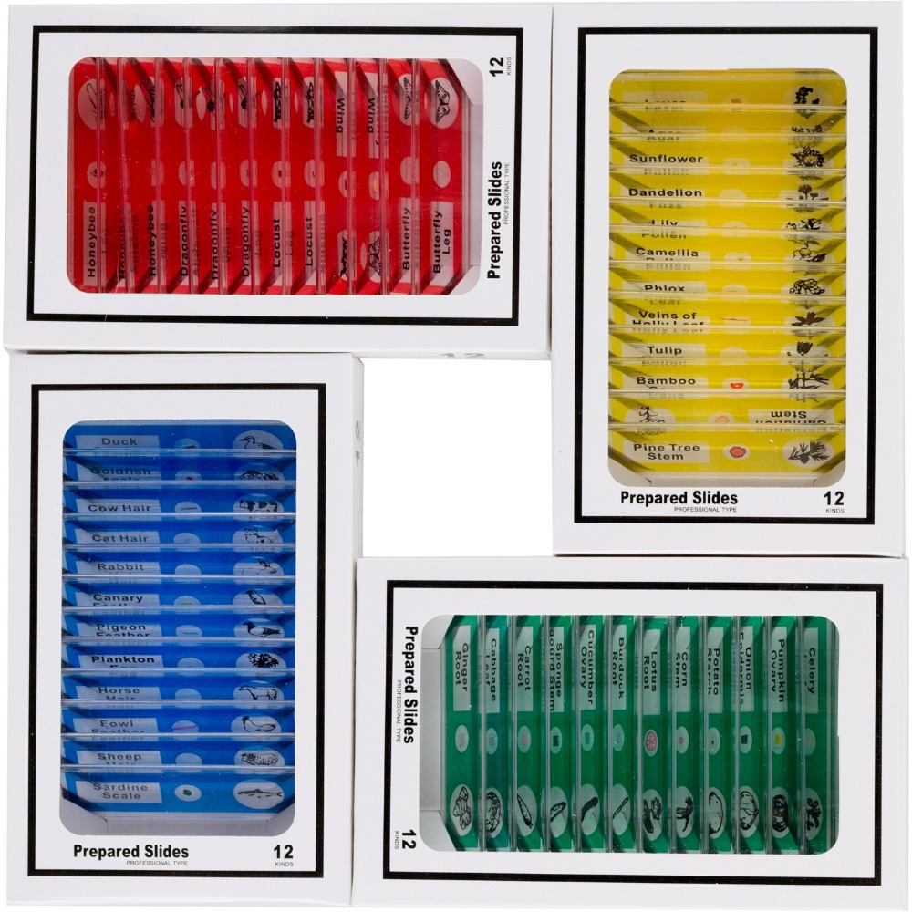 AmScope 48pc Kids Plastic Prepared Microscope Slides of Animals Insects Plants Flowers Sample Specimens PS 4P12X1