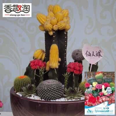 1 Original Pack 10 Seeds Mixture Of Cactus,Office Desks Mini Succulents  Flower Seed