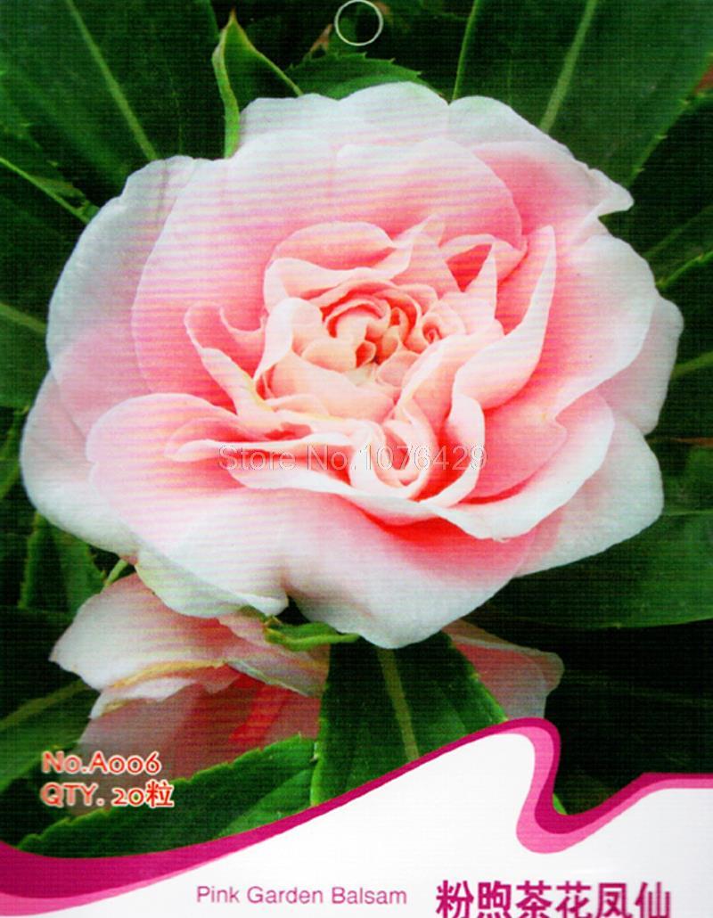 Pink Impatiens Balsamina Seeds Pink Garden Balsam Camellia Flower