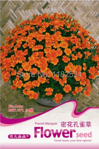 $0.99/Pack French Marigold seeds bonsai grass plant F