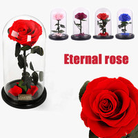 Preserved Fresh Flowers Eternal Rose Flower Beauty and the Beast Red Rose in a Glass Dome on a Wooden Base for Valentine's Gifts