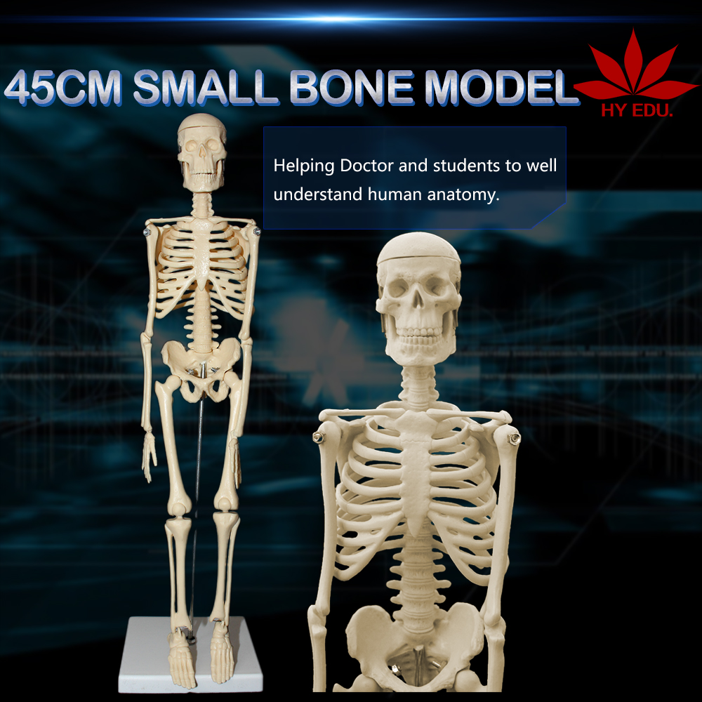Office and school supplies biological 45cm human skeleton model teaching aid mini skeleton