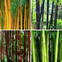 40PCS Bamboo Seeds Phyllostachys Pubescens Rare Giant Bamboo Seeds Bambusa Lako Tree Seeds For Home Garden Plant