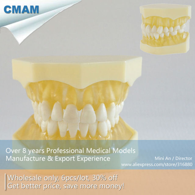 CMAM DA013 Transparent Dental Soft Gum 28pcs Teeth Standard Dental ...