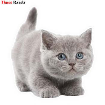Three Ratels LCS453# 12.8x14cm Lovely Cat car stickers funny car stickers styling removable decal image