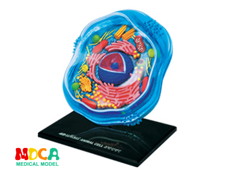 Animal cells 4d master puzzle Assembling toy human body organ anatomical model medical teaching model колымские рассказы в одном томе эксмо