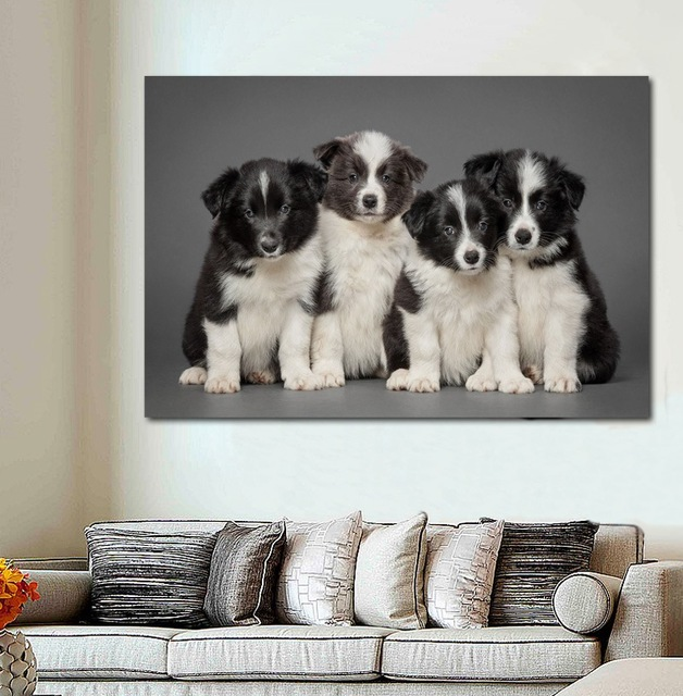 Lovely Little Border Collie Puppies Animals Dogs Photo Dw49 Room