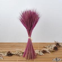 100 PCS Decoração de Casamento buquê de Flores Secas da planta natural de trigo Seco seco flor adereços flor artificial flores inmortales