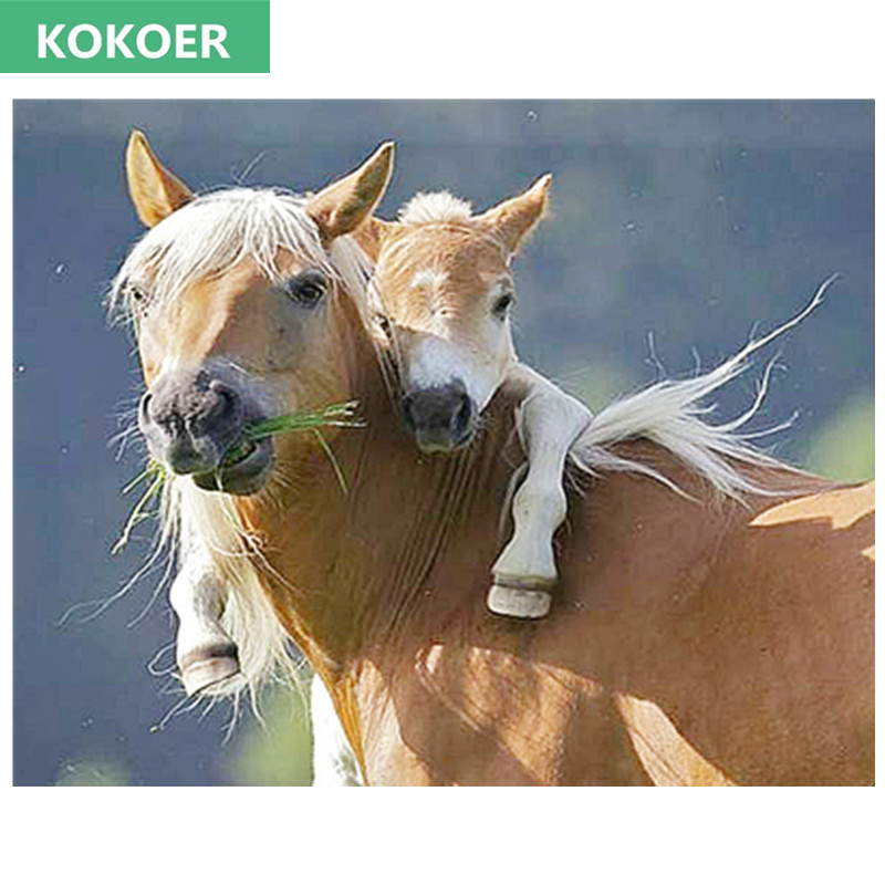 kokoer Full,Diamond Embroidery,5D,Diamond Painting,horse Pony Cross Stitch,3D,Diamond Mosaic,Needlework,Crafts,Christmas,Gift
