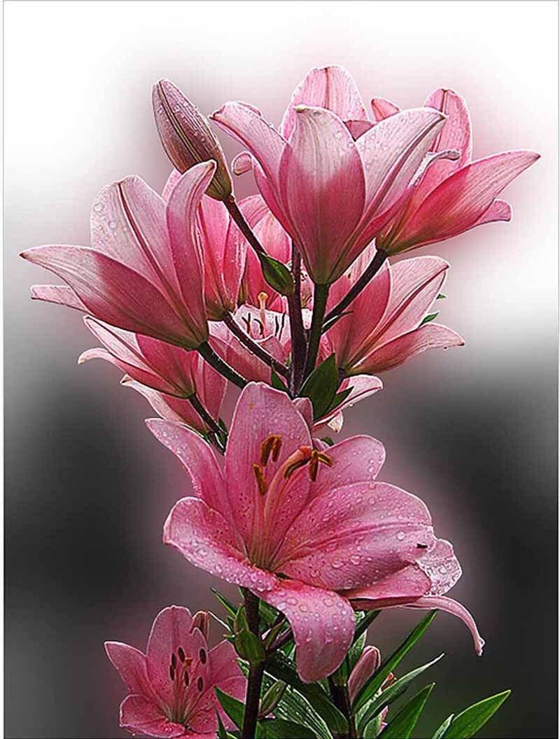 Diy Diamond Painting Purple Pink Lily Flowers 3d Art Rhinestone