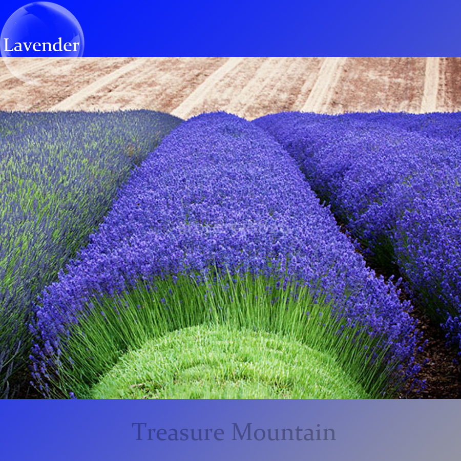 Bellfarm Bonsai Heirloom Purple Pink Blue Lavender Perennial