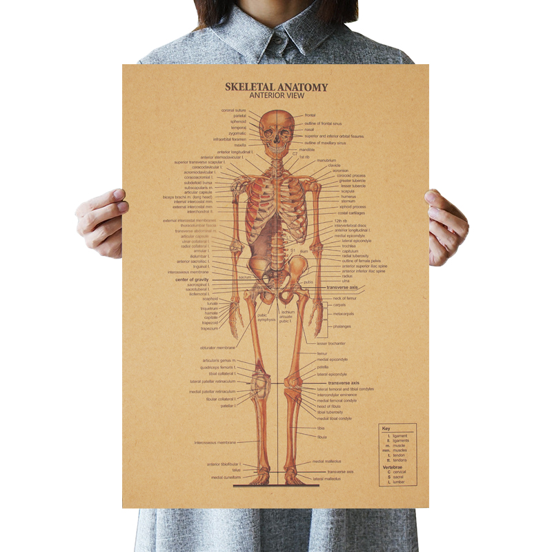 The Skeleton Of The Body Structure Nervous System Poster Bar Home Decor Paintings Retro Kraft Paper 51.5x36cm Wall Sticker
