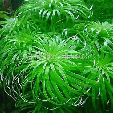яванский мох для аквариума с доставкой в Россию