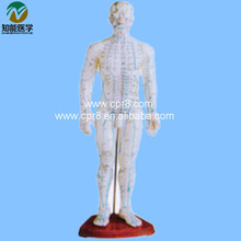 Acupuncture Model (Male) 50CM BIX-Y1007 WBW191
