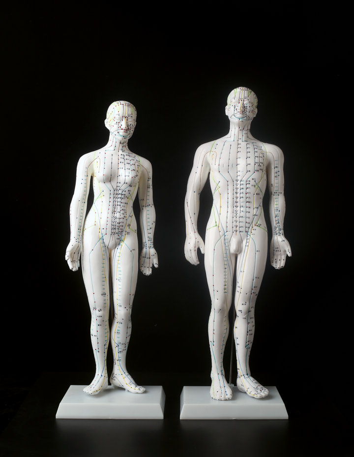 Meridian Model Human Acupuncture Meridian Points Model 50cm 48cm Male Female Acupoint Model Medical Education Teaching