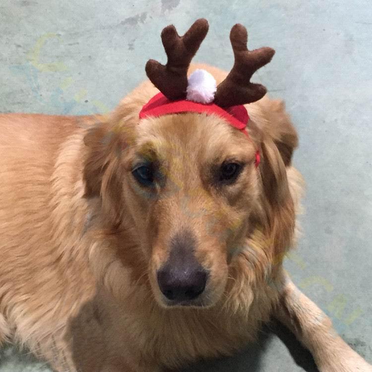 160pcs Christmas pet Santa Claus hat dog Xmas elk Headdress cat cap Christmas party gift cute Ornaments short plush pet