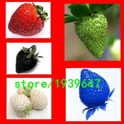 Rare Fragrant Sweet Juicy 200PCS Seeds Strawberry Gia X
