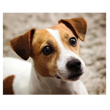 Diy Diamond Embroidery jack russell terrier 5d Full Square round Drill Diamond Painting Cross Stitch picture by number ZP-841