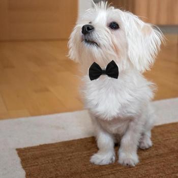Dog Cat Pet Tie Puppy Toy Bow Tie Necktie Clothes British Black Kitten Tie Handsome Dog Puppy Necktie for Pet Festival Decor 1