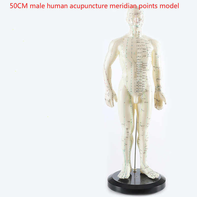 3pcs/sets Human Meridian Acupuncture Point Health Therapy