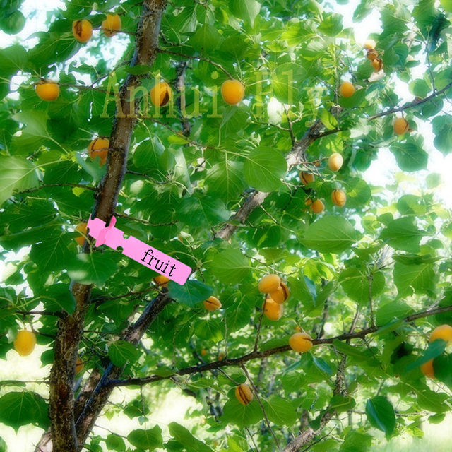 30pcs gardening garden hang tag label hanging tree seedling plant fruit trees signs prompt card classification tool