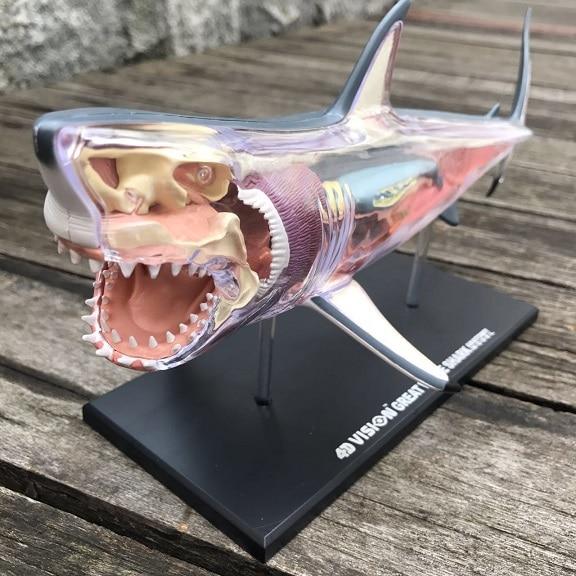 plastic assemble model Animal Model Shark Anatomy Shark mr froger carcharodon megalodon model giant tooth shark sphyrna aquatic creatures wild animals zoo modeling plastic sea lift toy