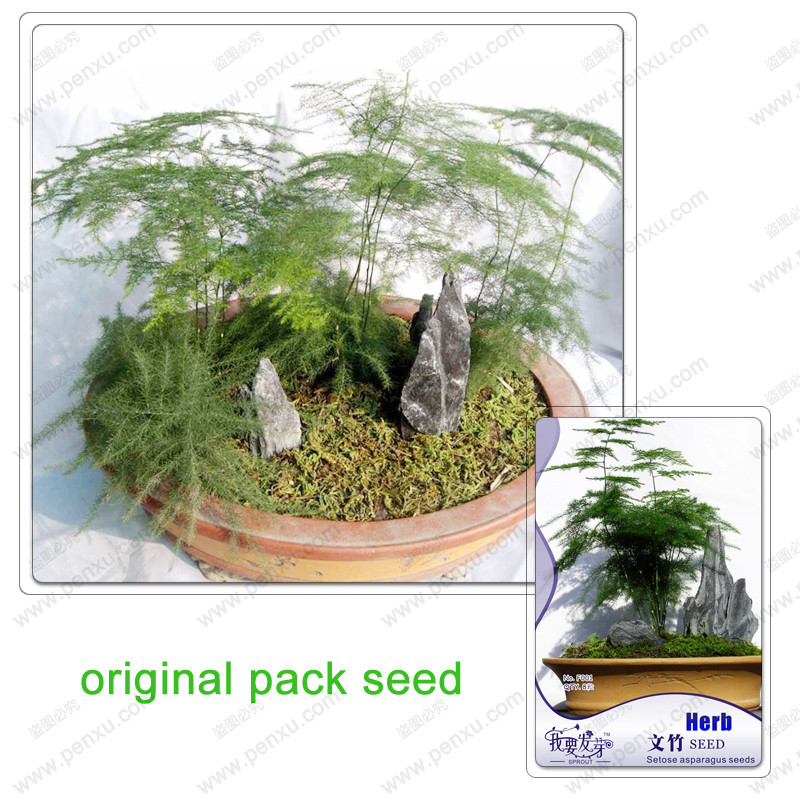 online buy wholesale asparagus fern plants from china